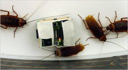 RoachRobot